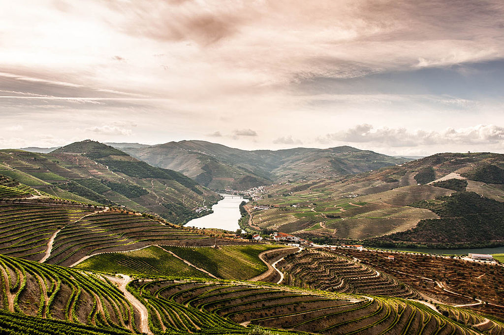 The_Douro_Valley_vineyards